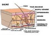 lazerepilasyon1